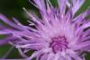 květy I