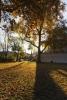 Podzim Letná, Stromovka, Troja